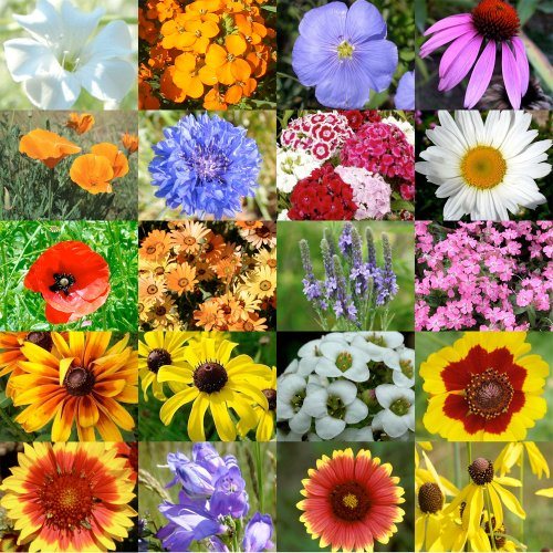 Top 10 best wildflower seed packets bulk 2020