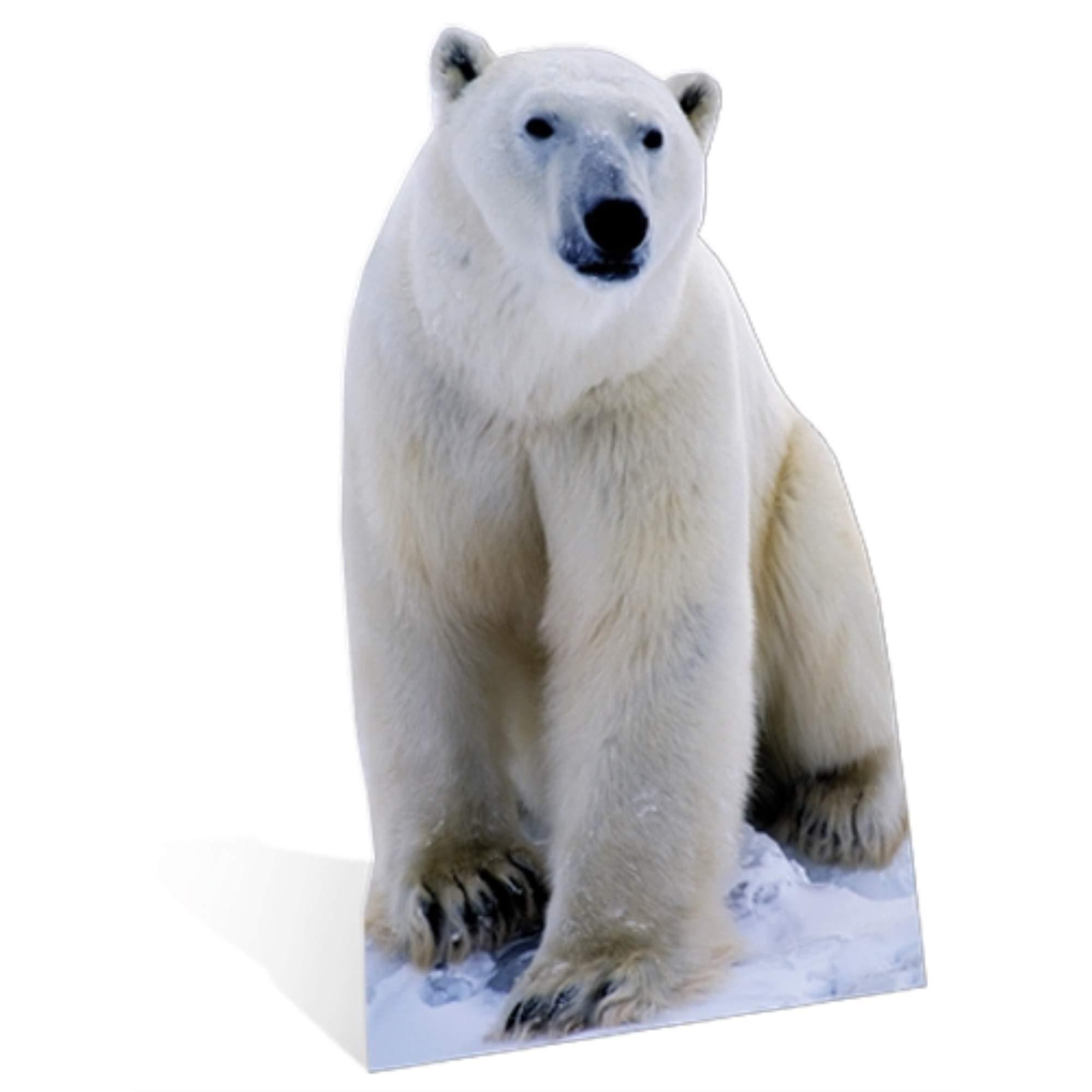 SC139 Polar Bear Cardboard Cutout Standup