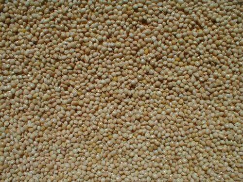 White Proso Millet - 10 lb bag
