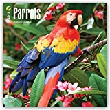 Parrots 2018 12 x 12 Inch Monthly Square Wall Calendar, Domestic Wildlife Animals Bird Tropical Rainforest