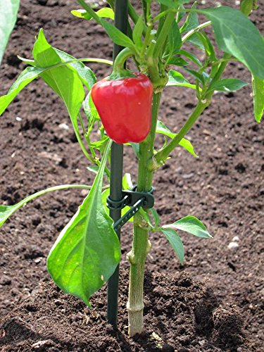 UniEco Garden Stakes 5FT Plant Stakes for Staking Tomatoes 20Pack by UniEco (Image #7)