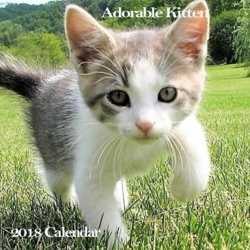 Adorable Kitten 2018 Calendar Smile 2018 Monthly Cute Baby Cat Kitten Calendar Mini Wall Calendar 8 5x8 5 Inches Calendar Lovely Animal 9781983665943 Books Amazon Ca
