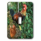 3dRose BrooklynMeme Farm Animals - Ameraucana Rooster - Light Switch Covers - single toggle switch (lsp_256642_1)