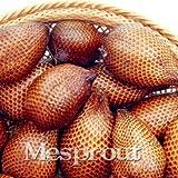 New Salak Seed Rare World Snakeskin Like Ginseng Fruit 20+ Seeds