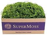 SuperMoss (26927) Spanish Moss Preserved, Grass, 3lbs
