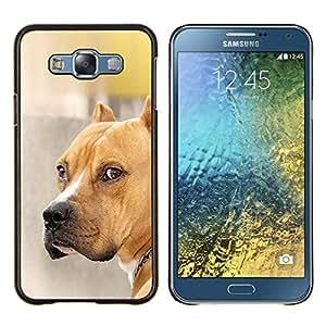 Cubierta protectora del caso de Shell Plástico || Samsung Galaxy E7 E700 || Pit Bull Dog Marrón Oro mascotas @XPTECH
