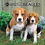 American Kennel Club Beagles 2018 Wall Calendar