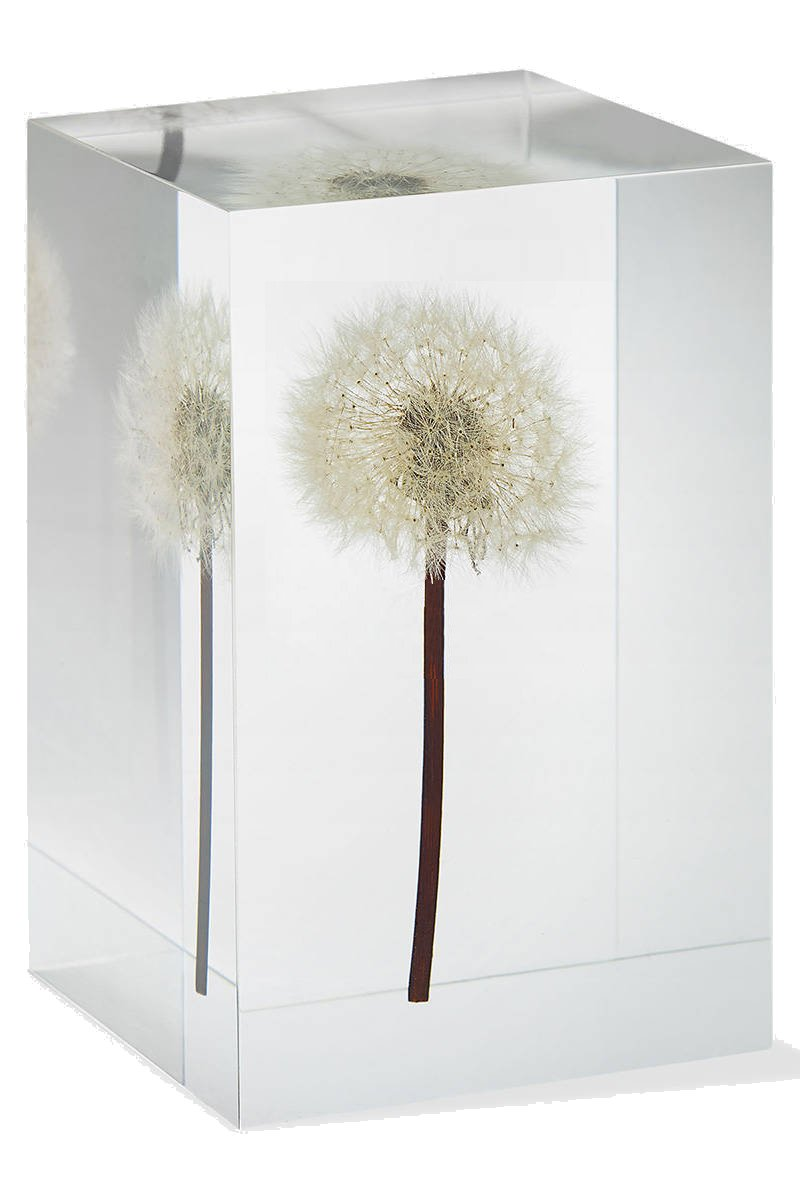 Dandelion Paperweight - Made from a Real Dandelion Seed Puff with Free Card and Envelope by Dandelion Collective LLC