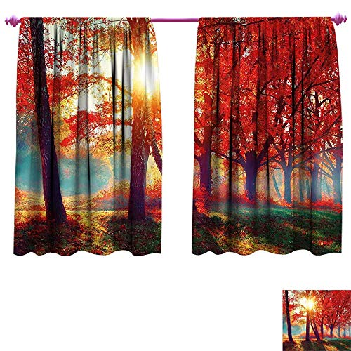 Tree Waterproof Window Curtain Autumnal Foggy Park Fall Nature Scenic Scenery Maple Trees Sunbeams Woods Decorative Curtains for Living Room W96 x L72 Orange Yellow Teal