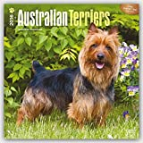 Australian Terriers 2016 Square 12x12 (Multilingual Edition)