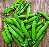 Green Arrow Pea Seeds - 14 grams