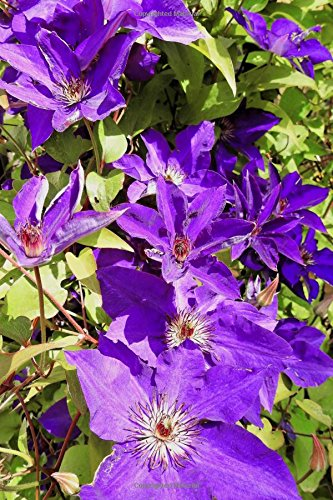 Read Online A Purple Clematis Flower Journal: 150 page lined notebook/diary PDF