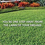 Bethel Farms St. Augustine 3in Natural Grass Plugs