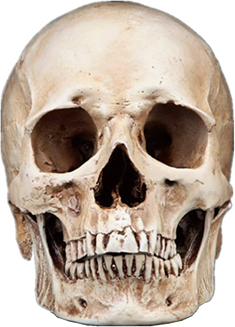 Details about  /Gothic Replica Carving Model Skull Figurine Human Head  Model Decor