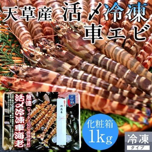 活〆冷凍 車海老 車えび 1kg[30~44尾]熊本県天草産 維和島 急速冷凍 加工場直送 刺身 新鮮 クルマエビ
