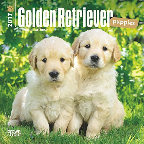 2017 Golden Retriever Puppies Mini 7x7 Wall Calendar Dogs...