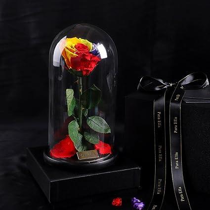 Muzidp Live Forever Rose In Glassimmortalized Flower Eternal Rose