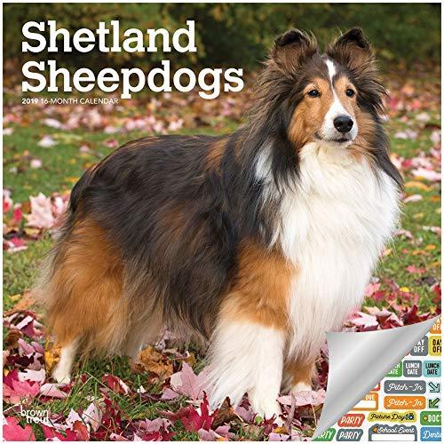 Shetland Sheepdogs Calendar 2019 Set - Deluxe 2019 Shetland Sheepdogs Wall Calendar with Over 100 Calendar Stickers (Shetland Sheepdogs Gifts, Office Supplies)
