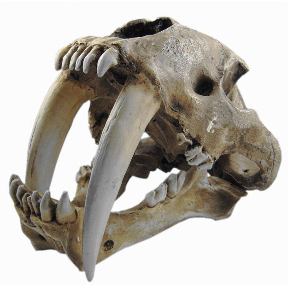 becc8146a Amazon.com: Gmasking Resin Smilodon Saber Tooth Tiger 1:1 Skull Replica(No  Display Stand): Toys & Games