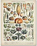 Antique Heirloom Vegetables - 11x14 Unframed Art Print - Great Gift for Kitchen Decor