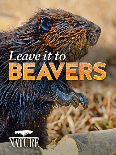 Leave it to Beavers - Wildlife Beaver