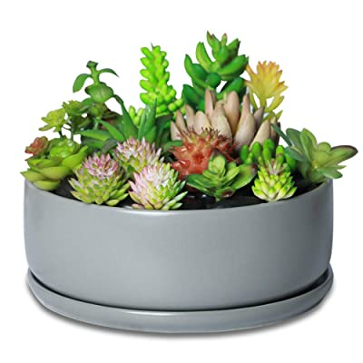 Gray Large Succulent Planter Indoor Planter Ceramic Planter Round Succulent Planter Flower Pot Plant Container Planters for Succulents with Drainage Hole and Ceramic Tray : Garden & Outdoor