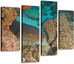 Nurse Shark at Key Largo Reef Canvas Wall Art Hanging Paintings Modern Artwork Abstract Picture Prints Home Decoration Gift Unique Designed Framed 4 Panel
