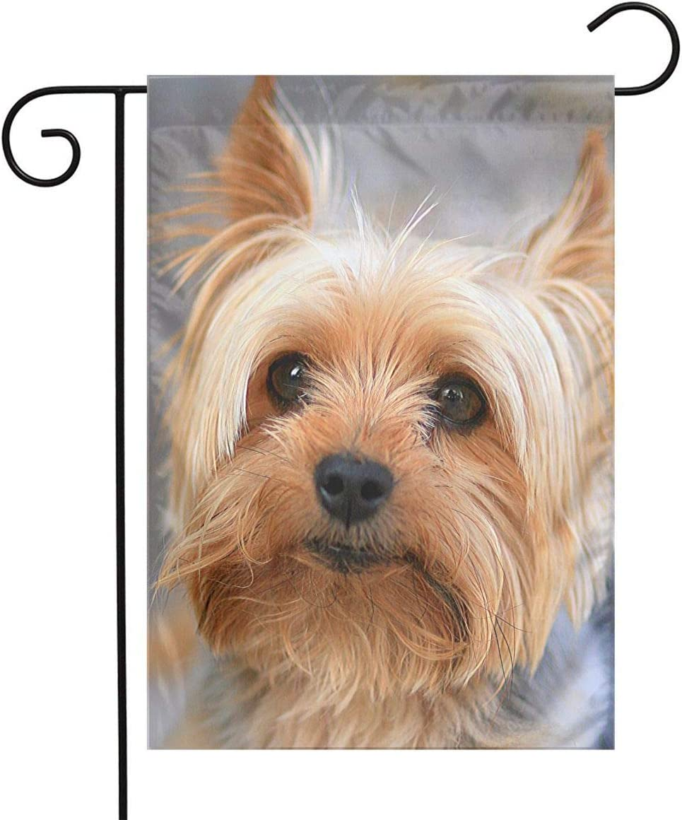 Cutest Yorkies Garden Flags House Indoor & Outdoor Holiday Decorations,Waterproof Polyester Yard Decorative \r\nFor Game Family Party Banner