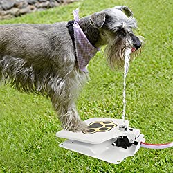 """GPCT Hygienic Dog/Pet Geyser Water Fountain/Dispenser (41"""" Hose, Prevents Your Pet From Drinking Stagnant Water, Paw Design, Durable Steel, Water Safe, Encourages Drinking)"""