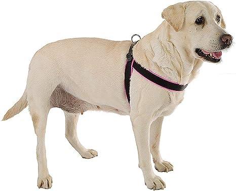 Ferplast Agila Fluo arnés para perros, fucsia, talla 6: Amazon.es ...