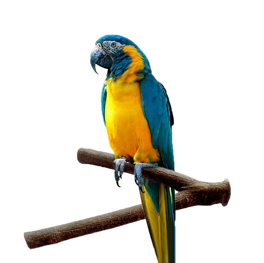 Keersi Wood Perch Cage Stand Toy for Bird Parrot Macaw African Greys Budgies Parakeet Cockatiels Conure Lovebird Finch Cage Toy
