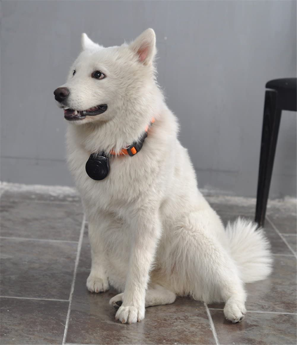 Puhui Digital Collar Camera For Dog