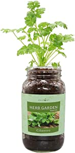 Environet Herb Gift Set, Mason Jar Herb Garden Starter Kit Indoor, Includes One Mason Jar, 3 Coco Coir Planting Wafers and Heirloom Seeds (Cilantro)