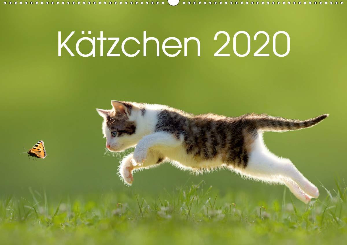 Kätzchen 2020  Wandkalender 2020 DIN A2 Quer