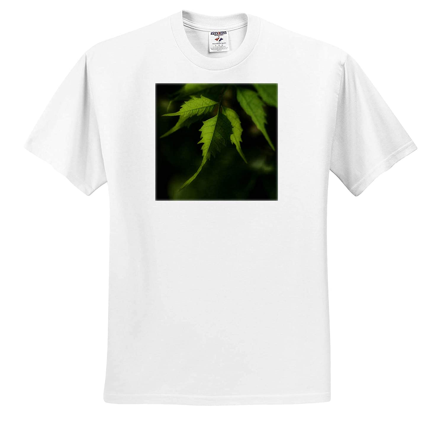 ts/_312243 Plants Macro Photograph of Trumpet Vine Leaves 3dRose Stamp City - Adult T-Shirt XL