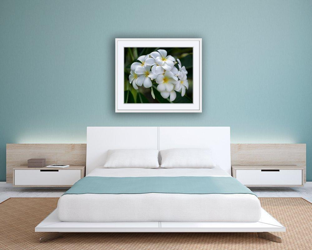 White Plumeria Flower Picture Tropical Hawaiian Art Decor Print