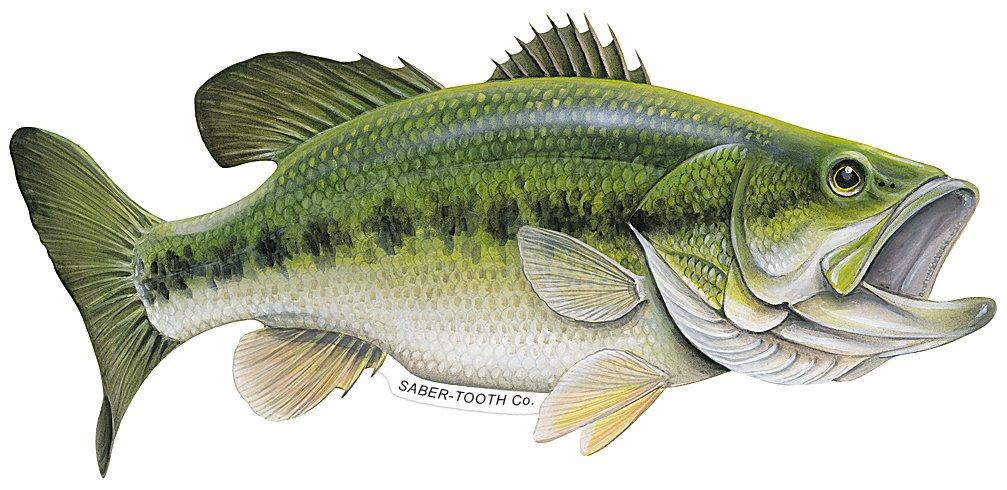 Amazon Saber Tooth Co Largemouth Bass Decalsticker