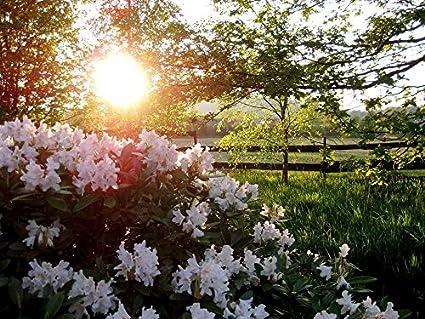 Amazon.com Home Comforts Laminated Poster Sun Flowers