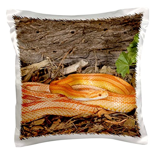 3dRose pc_84044_1 Striped Albino Corn Snake, Native to Eastern US-NA02 DNO0717-David Northcott-Pillow Case, 16 by 16