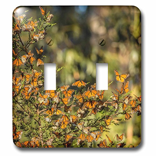 3dRose Danita Delimont - Butterflies - California, Pismo Beach. Monarch butterflies clustering in winter sun. - Light Switch Covers - double toggle switch - Beach Outlets Pismo