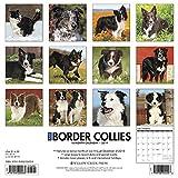 Just Border Collies 2019 Wall Calendar
