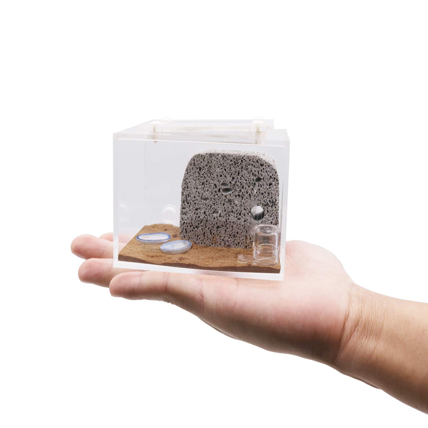 INNOLIFE Ant Castle Big Ants Farm with Ant Nest Rockery Formicarium(Model 2-Mini) by INNOLIFE