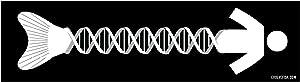 """DNA Evolution Bumper Sticker - [11"""" x 3""""]"""