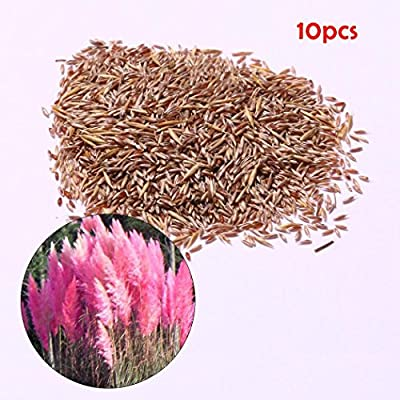 Bravet Colorful Pampas Grass Seeds Home Garden DIY Plants Easy Grow Dresses: Clothing