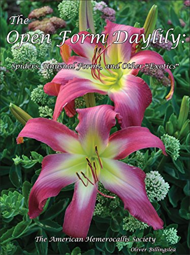 The Open Form Daylily ()