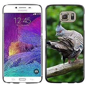 Grand Phone Cases Etui Housse Coque de Protection Cover Rigide pour // M00142524 Paloma Pájaro Pájaros Animales pluma // Samsung Galaxy S6 (Not Fits S6 EDGE)