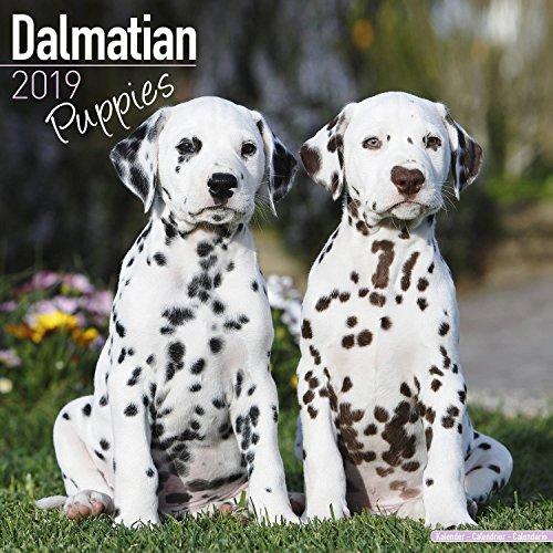 Dalmatian Puppies Calendar 2019 - Dog Breed Calendar - Wall Calendar 2018-2019