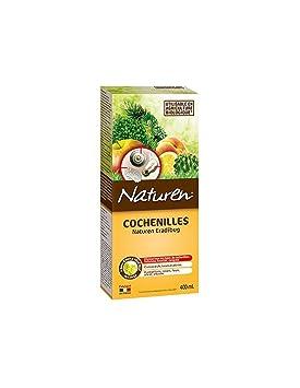 huile colza cochenille