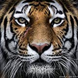 DIY 5D Diamond Painting by Number Kits, Full Drill Crystal Rhinestone Embroidery Pictures Arts Craft for Home Wall Decor Gift,Tiger