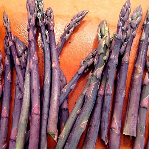 10 Asparagus Crown Purple Passion 2 Year Roots
